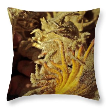 Inside The Sago Palm Throw Pillow by Gwyn Newcombe