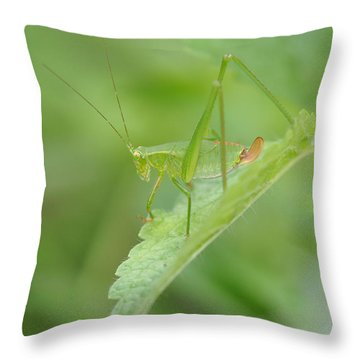 Iridescent Green Beauty On Lemon Balm Throw Pillow