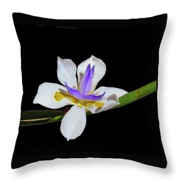 Iris Throw Pillow by Bonnie Muir