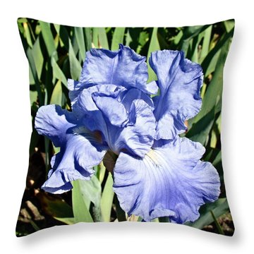 Throw Pillow featuring the photograph Iris by Nick Kloepping