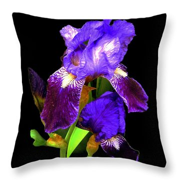 Iris On Black Throw Pillow