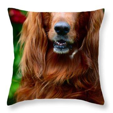 Irish Setter I Throw Pillow by Jenny Rainbow