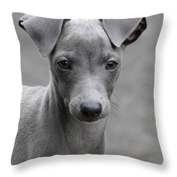 Italian Greyhound Puppy 2 Throw Pillow by Angie Vogel