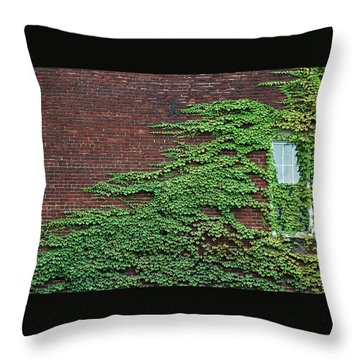Throw Pillow featuring the photograph Ivy Covered Window by Gary Slawsky