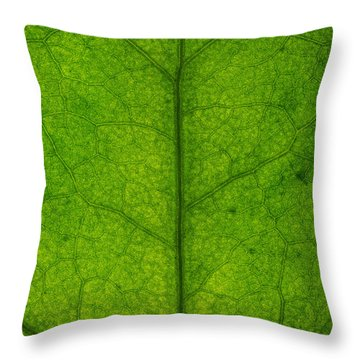 Ivy Leaf Throw Pillow by Steve Gadomski