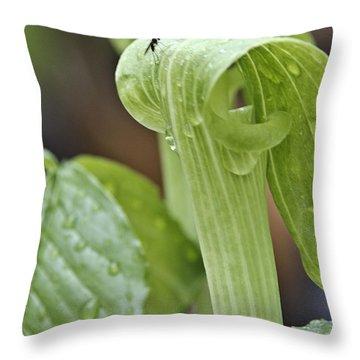 Jack Fly Throw Pillow by LeeAnn McLaneGoetz McLaneGoetzStudioLLCcom