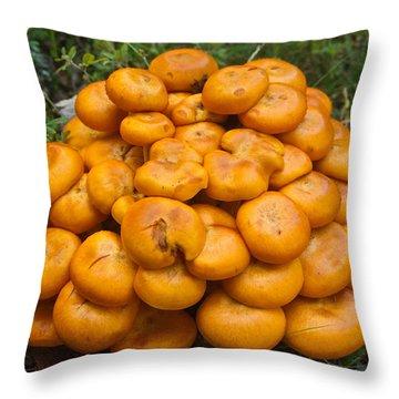 Jack Olantern Mushrooms 2 Throw Pillow by Douglas Barnett