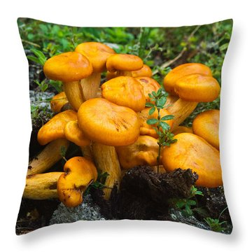 Jack Olantern Mushrooms 4 Throw Pillow by Douglas Barnett