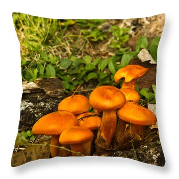 Jack Olantern Mushrooms 7 Throw Pillow by Douglas Barnett