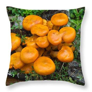 Jack Olantern Mushrooms 9 Throw Pillow by Douglas Barnett