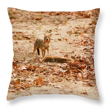 Throw Pillow featuring the photograph Jackal Standing Over Deer Kill by Fotosas Photography