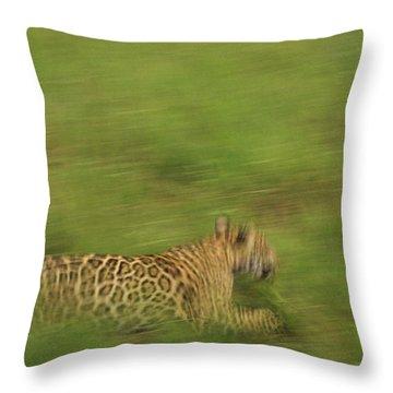 Jaguar Panthera Onca Running Throw Pillow by Claus Meyer