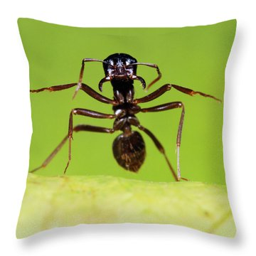 Japanese Slave-making Ant Polyergus Throw Pillow by Satoshi Kuribayashi