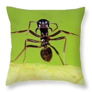 Japanese Slave-making Ant Polyergus Throw Pillow