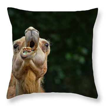 Jaw Dropping Throw Pillow by Karol Livote