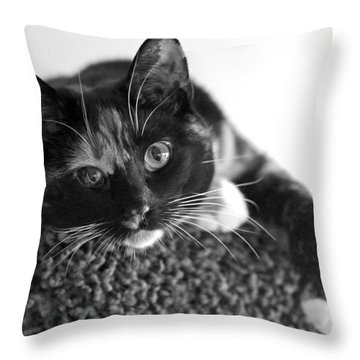 Jocko Throw Pillow by Lisa Phillips