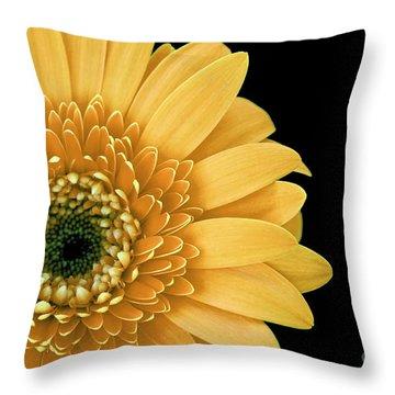Joyful Delight Gerber Daisy Throw Pillow by Inspired Nature Photography Fine Art Photography