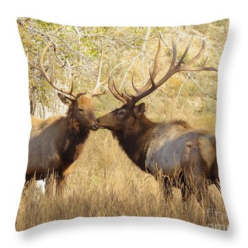 Junior Meets Bull Elk Throw Pillow by Robert Frederick