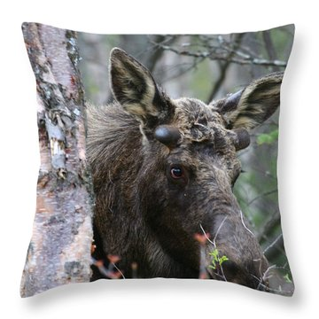 Throw Pillow featuring the photograph Just A Start by Doug Lloyd