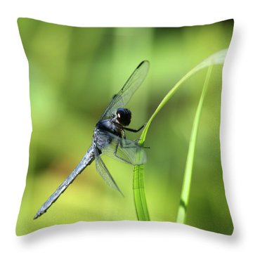 Just Hanging On Throw Pillow by Karol Livote