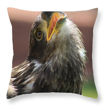 Juvenile Bald Eagle Throw Pillow by Alyce Taylor