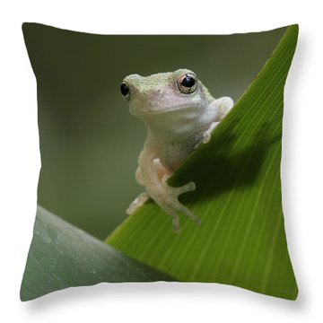 Juvenile Grey Treefrog Throw Pillow