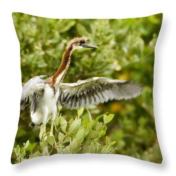 Juvenile Tricolored Heron Egretta Throw Pillow