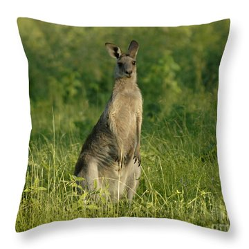 Kangaroo Female Throw Pillow by Bob Christopher