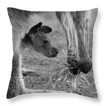 Kangaroo Joey Throw Pillow by Camilla Brattemark