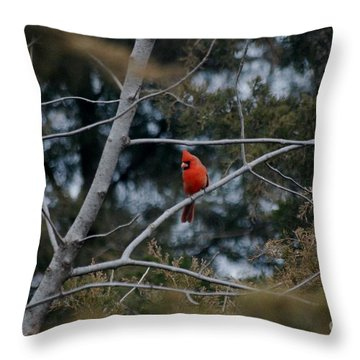 Kansas Cardinal Throw Pillow