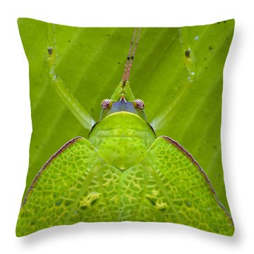 Katydid Mamang River Forest Reserve Throw Pillow