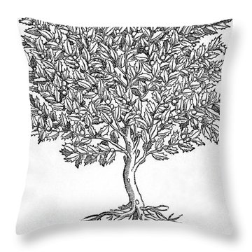 Kermes Oak Tree Throw Pillow by Granger