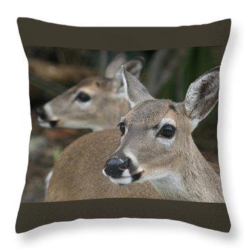 Key Deer Florida Throw Pillow by Valia Bradshaw
