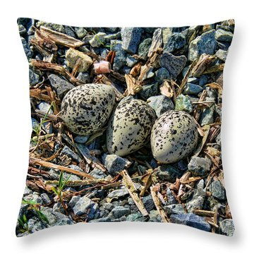 Killdeer Bird Eggs Throw Pillow
