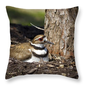 Killdeer Throw Pillow