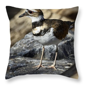 Killdeer Throw Pillow by Saija  Lehtonen