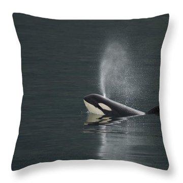 Killer Whale Calf Blows As It Surfaces Throw Pillow by Ralph Lee Hopkins
