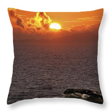 Killer Whale In The Water Throw Pillow by Richard Wear