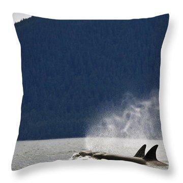Killer Whales, Alaska, Usa Throw Pillow by Richard Wear