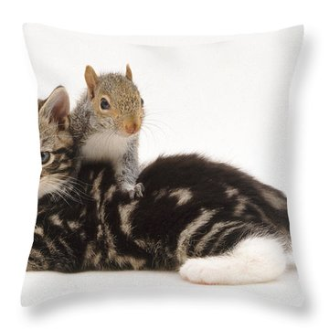 Kitten And Squirrel Throw Pillow by Jane Burton