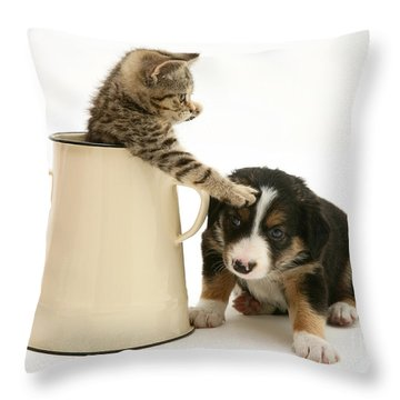 Kitten In Pot With Pup Throw Pillow by Jane Burton