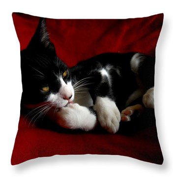 Kitten On Red Take Two Throw Pillow by Maggy Marsh