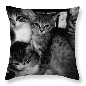 Kittens Corner Throw Pillow by Christy Leigh