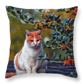Throw Pillow featuring the photograph Kitty On The Roof by Margaret Palmer