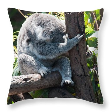 Koala Throw Pillow by Carol Ailles