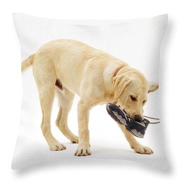 Labrador X Golden Retriever Puppy Throw Pillow by Jane Burton