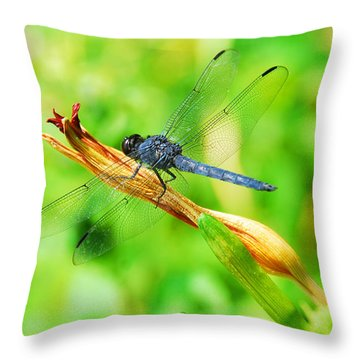 Lace Wings Throw Pillow by Cindy Manero