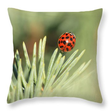Throw Pillow featuring the photograph Lady Beetle On A Needle by Penny Meyers