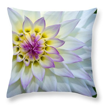 Throw Pillow featuring the photograph Lady Dahlia by Ken Stanback