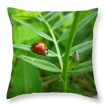Throw Pillow featuring the photograph Ladybug And Bud by Renee Trenholm